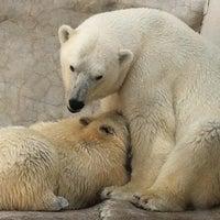 Photo taken at Toledo Zoo by Cheryl Z. on 7/14/2013