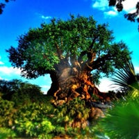 Photo taken at Disney's Animal Kingdom by Michael C. on 3/31/2013