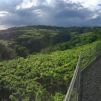 Photo taken at Gambellara by Harrolf H. on 6/19/2016