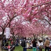 4/28/2013にMyshellpantsがBrooklyn Botanic Gardenで撮った写真