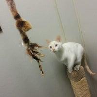Photo taken at Animal Welfare League of Arlington by Minju K. on 1/24/2013