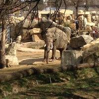 Photo taken at Prague Zoo by Никита К. on 4/14/2013
