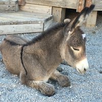 Photo taken at Oatman, AZ by Stacy L. on 9/13/2016