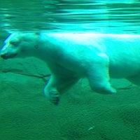 Photo taken at Denver Zoo by Joe A. on 7/13/2013