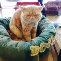 Photo taken at Purrfect Pet House by ielamorry o. on 9/5/2015
