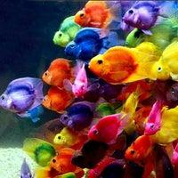 Photo taken at Dallas World Aquarium by Erica G. on 4/8/2013