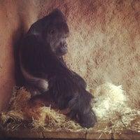 Photo taken at Pavilon goril by Alenka D. on 3/26/2013