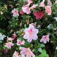 Photo taken at McCrillis Gardens by Titi P. on 6/17/2017