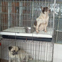 Photo taken at Animal Shelter Vet Clinic by Liezl C. on 1/20/2013