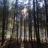 9/11/2015에 Bara W.님이 Nejlepčí houbařskej les에서 찍은 사진