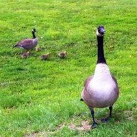 Photo taken at Stricker's Pond Park by Martin M. on 6/15/2013