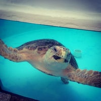 Photo taken at Loggerhead Marinelife Center by Nina R. on 11/8/2013