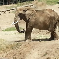Photo taken at African Elephants by Viroo M. on 5/26/2013