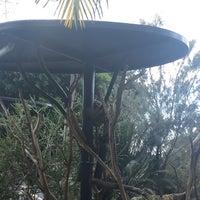 3/16/2018 tarihinde Kathryn C.ziyaretçi tarafından Koala Exhibit'de çekilen fotoğraf