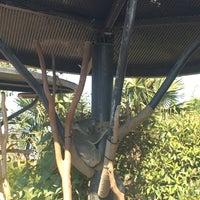 7/4/2018 tarihinde Kathryn C.ziyaretçi tarafından Koala Exhibit'de çekilen fotoğraf