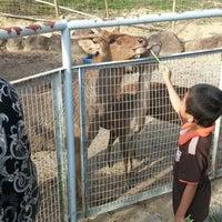 Photo taken at Mini Zoo Taman Teruntum by Nurli Suffian Zulkiffeli on 3/29/2014