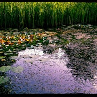 Das Foto wurde bei Воронцовский парк von Natalie U. am 7/10/2013 aufgenommen