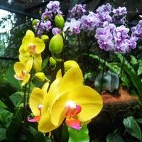 Das Foto wurde bei National Orchid Garden von Kay P. am 3/30/2013 aufgenommen