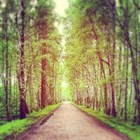 Снимок сделан в Парк «Сосновка» пользователем Ксения П. 5/23/2013