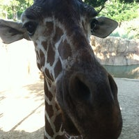 Photo taken at Dallas Zoo by Christy C. on 7/14/2013