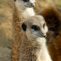 Das Foto wurde bei Kölner Zoo von VisitKoeln am 2/6/2013 aufgenommen
