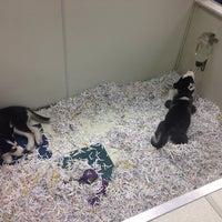Photo taken at Pet Shop by Dennis J. on 8/12/2014