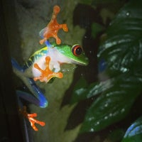 Photo taken at Frog Pond of Monteverde by Amy T. on 11/26/2014