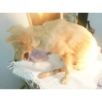 Photo taken at Philos Veterinary Clinic by Justine M. on 8/15/2014