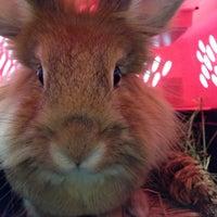 Photo taken at Chicago Exotics Animal Hospital by karie k. on 5/24/2014