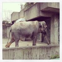 Photo taken at Inokashira Park Zoo by raizox on 3/24/2013