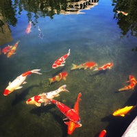 Photo taken at The Koi Pond by Raul Z. on 4/24/2016