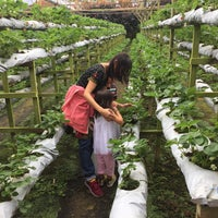 Foto diambil di Genting Strawberry Leisure Farm oleh Eileen C. pada 12/9/2017