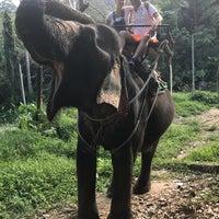 Photo taken at Safari Elephant by Sabina D. on 1/16/2018