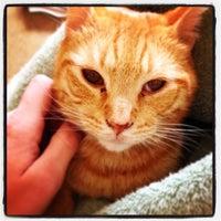 Goodyear Animal Hospital and Grooming