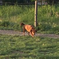 Photo taken at Hound Hill Dog Park by Ashley M. on 6/12/2016