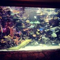 12/19/2012에 Justin B.님이 The Mirage Aquarium에서 찍은 사진