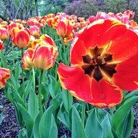 Foto diambil di Sherwood Gardens oleh Schmamie pada 4/30/2013