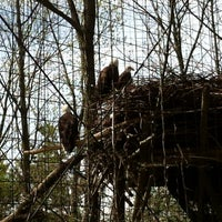 Photo taken at Bald Eagle Exhibit by Tom C. on 4/21/2013