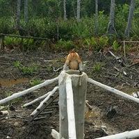 Photo taken at Labuk Bay Proboscis Monkey Sanctuary by Shahrul Izwani O. on 12/12/2014