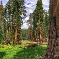 Photo taken at Giant Trees Meadow by Mikhail M. on 6/12/2016