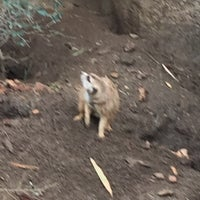 Photo taken at Meerkat Exhibit by Deborah C. on 1/2/2017