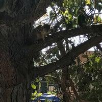 Foto tomada en Bird Park at Upas por Deborah C. el 4/30/2017