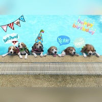 Foto tomada en Sa-by-jai Dog Swimming Pool por Vicky Onthira B. el 8/15/2015