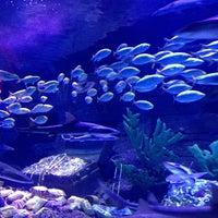6/22/2013 tarihinde Semra G.ziyaretçi tarafından Antalya Aquarium'de çekilen fotoğraf