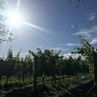 Photo taken at Spier Wine Farm by Sveta Y. on 12/6/2017