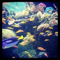 Photo taken at S.E.A. Aquarium by jessica chong on 2/26/2013
