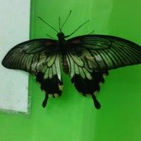 Photo taken at выставка живых тропических бабочек by Юлия Я. on 6/12/2014