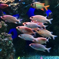 Photo taken at Maui Ocean Center, The Hawaiian Aquarium by Laura M. on 3/31/2015