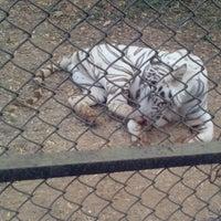 Photo taken at Nandankanan Zoological Park by Ajit N. on 3/16/2013