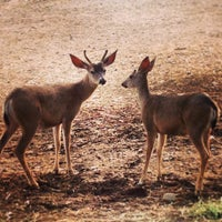 Photo taken at Will Rogers State Historic Park by Emmanuel on 6/1/2014